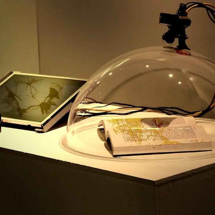 "Degenerating Nature and Culture: a ""bhiobrid"" fungi-digital network"